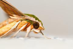 Moth in the nature Stock Photos