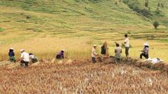 Rice Terraces Yunnan Stock Footage