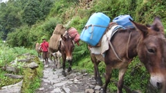 Caravan of donkeys carrying supplies in the Himalayas Stock Footage