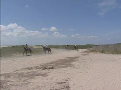 Horse riding on the beach and dune landscape of mont saint michel bay, FRANCE Stock Footage