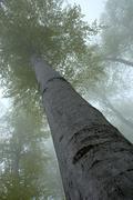 Insight into the treetops Stock Photos
