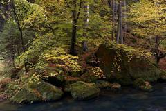 Autumn at the Brook Stock Photos