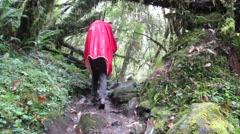 Hiker trekking in the jungle. Himalayas, Nepal Stock Footage
