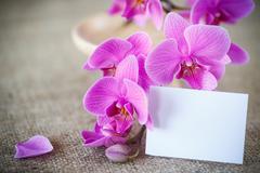 Stock Photo of Beautiful purple phalaenopsis flowers