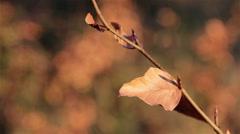 Autumn Leaf Shallow Depth of Field in Beautiful Sun Light Forest Scene Stock Footage