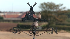 COLLARD DOVES & RUSTY WEATHERVANE, CAYTON BAY, NORTH YORKSHIRE Stock Footage