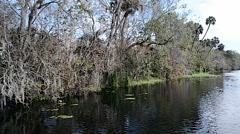 FloridaCentral_BlueSpringPark_StJohnsRiver_50svv Stock Footage