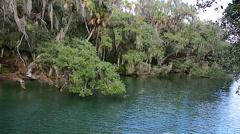 FloridaCentral_BlueSpringPark_StJohnsRiver_72svv Stock Footage