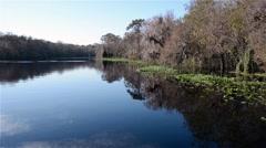 FloridaCentral_BlueSpringPark_StJohnsRiver_02sv Stock Footage