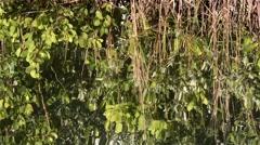 Plants_Reflection_river_02osvv Stock Footage