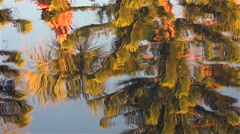 Palmtree_SpruceTree_Reflection_river_02osvv - stock footage