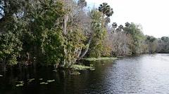 FloridaCentral_BlueSpringPark_StJohnsRiver_52svv Stock Footage