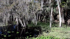 FloridaCentral_BlueSpringPark_StJohnsRiver_05Revsv Stock Footage