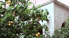 Cyprus Greek side Limassol 015 lemon tree with fruits at a house wall Stock Footage