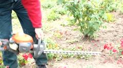 Professional gardener pruning an rose bush Stock Footage