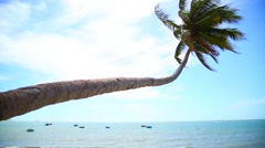 Tropical paradise with palm  tree on the beach Stock Footage