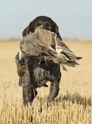Watarefowl Hunting Stock Photos