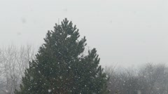 Snowflakes Falling in Front of The Wintergreen Tree Slow Motion Stock Footage