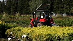 Tractor working in a nursery with plants for timber Stock Footage