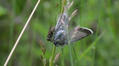 fly eat death butterfly - stock footage