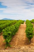 Diminishing rows of Vineyard Field in Southern France Stock Photos