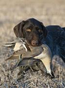 Waterfowl Hunting Stock Photos