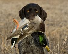 Duck Hunting Stock Photos
