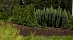 Nursery plants for timber Stock Footage