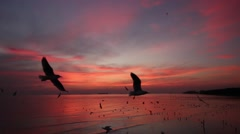 Flock of Seagulls fly over sea in twilight sky Stock Footage