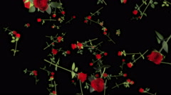 Falling 3D Roses 01 - stock footage