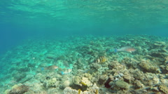 Pan view of fish among corals in the Red Sea - Egypt Stock Footage