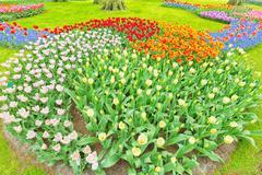 Flower arrangement of tulips in Holland Stock Photos