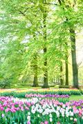 Tulip flowerbeds in a spring garden Stock Photos
