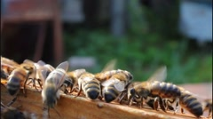 Bees in hive taken out of box Stock Footage