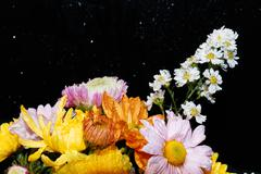 Beautiful bouquet of bright flowers isolated on black - stock photo