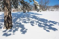 Evergreen tree and shadow in white snow Stock Photos