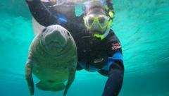 Endangered Florida Manatee and man swimming in Crystal River, Florida, USA. Stock Footage