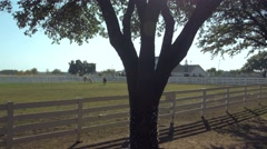 Southfork Ranch from Dallas TV series with trees and horses Stock Footage