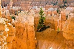 Navajo Loop Trail - Wall Street: Bryce Canyon National Park - stock photo