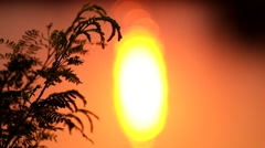Silhouette of grass With the morning light at Lake Stock Footage