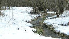 Hazelnut blossom and creek in wintertime Stock Footage
