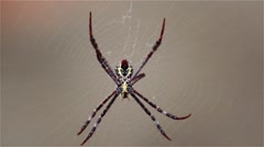 Spider on its webs Stock Footage