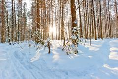 morning bright sun in the winter forest - stock photo