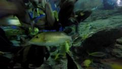 4K-Variety of Marine Fish Species Gathered Together at Feeding Time. Stock Footage
