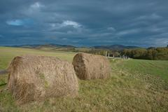 Silage - stock photo