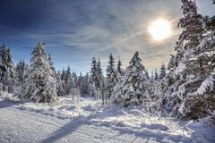 wintry forest - stock photo