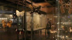 Butterflies - Natural Sciences Museum - Brussels 005 Stock Footage