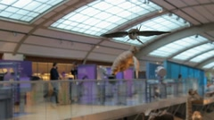 Bird - Natural Sciences Museum - Brussels Stock Footage