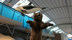 Bear- Natural Sciences Museum - Brussels Stock Footage