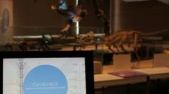 Dinosaure Museum - Brussels 003 Stock Footage